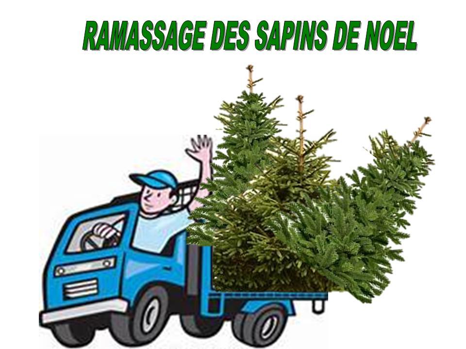 RAMASSAGE DE SAPINS