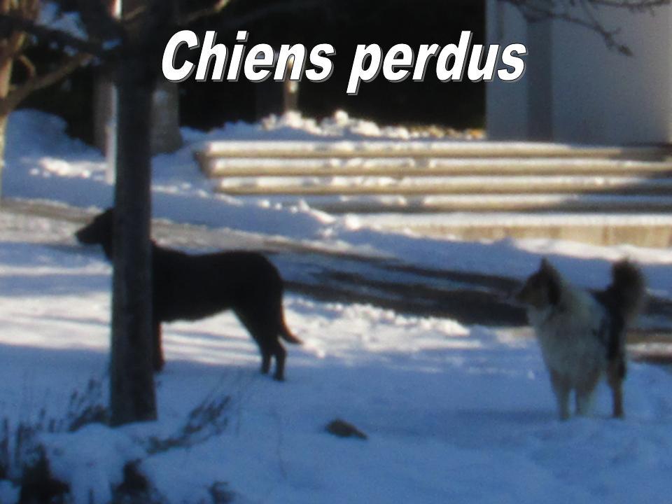 CHIENS PERDUS