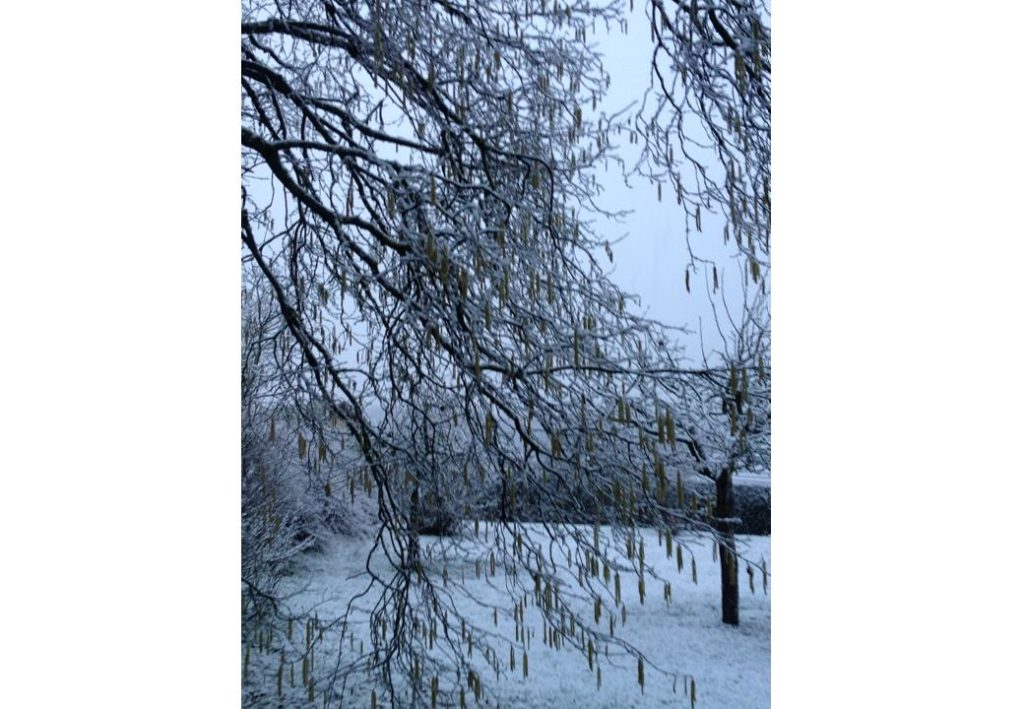 neige 9