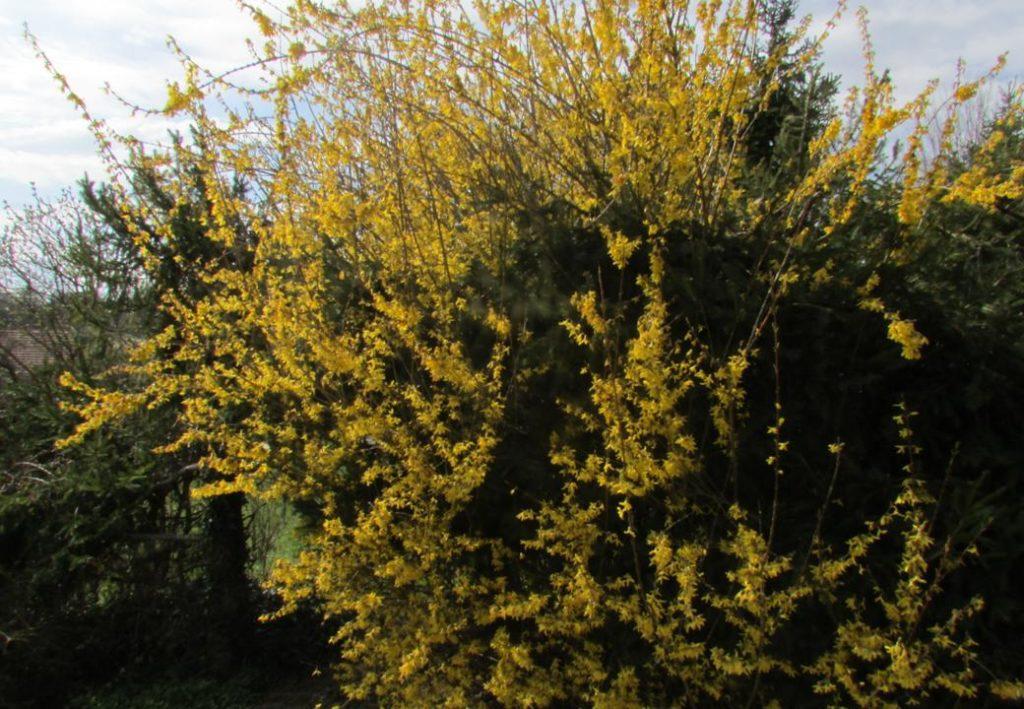 printemps dung12