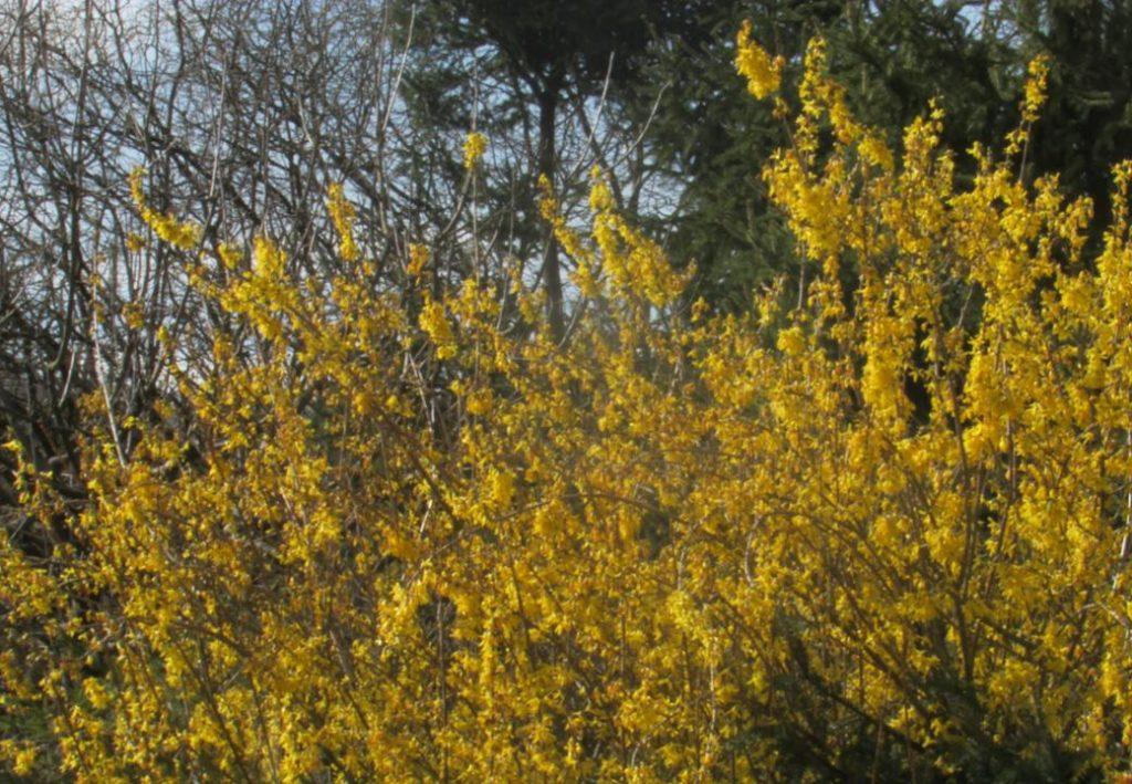 printemps dung13