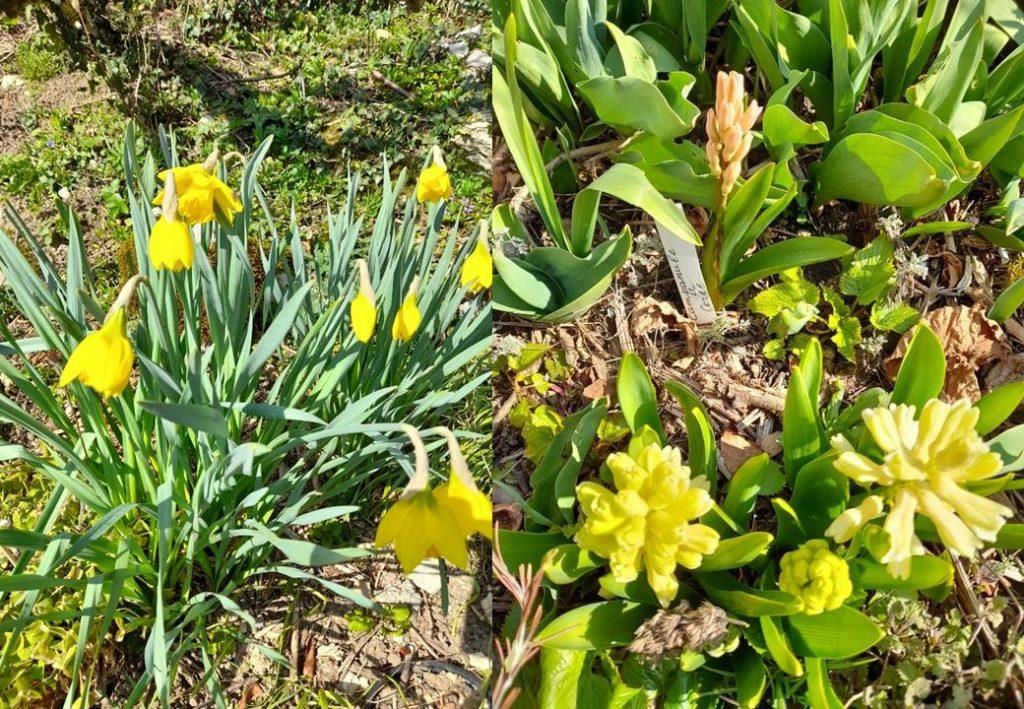 printemps dung14