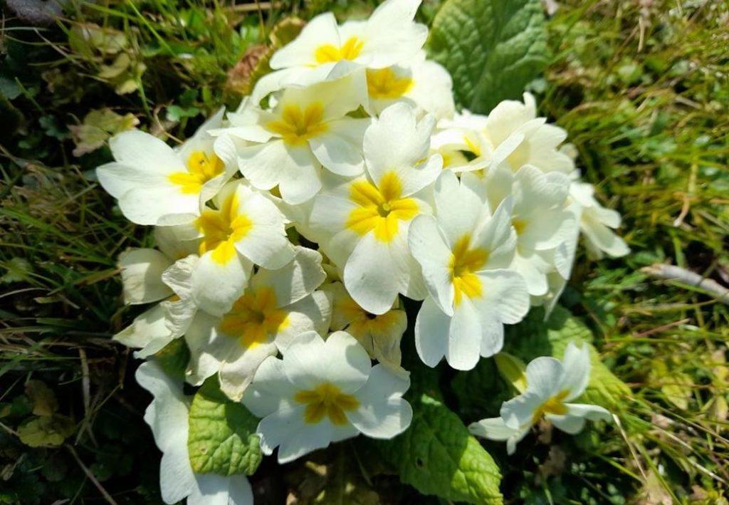 printemps dung3