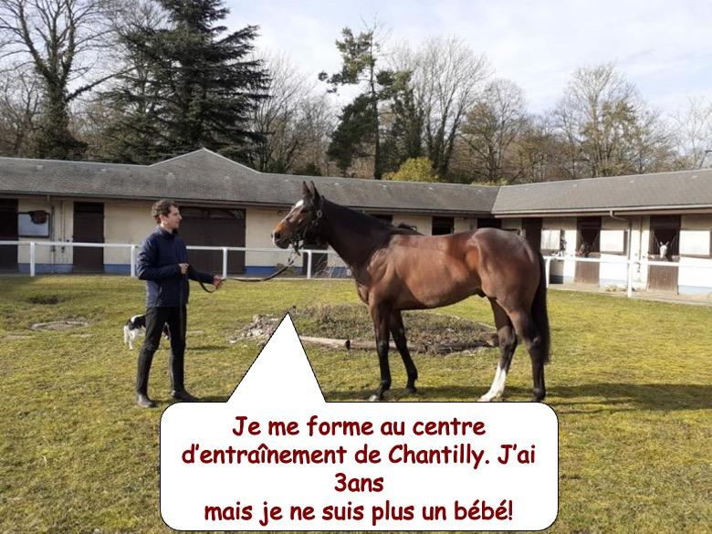 cheval de course4
