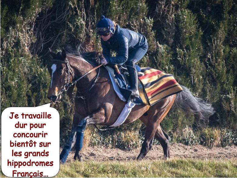 cheval de course5