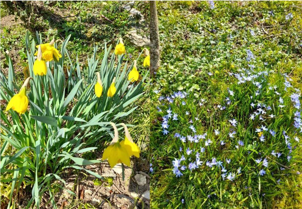 printemps dung5