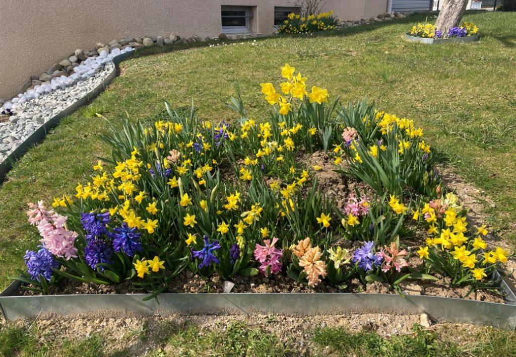 printemps dung6