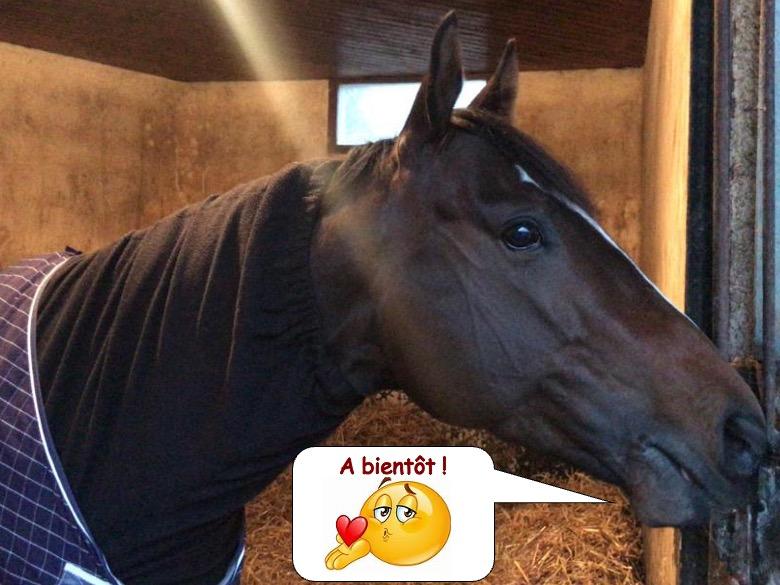 cheval de course7