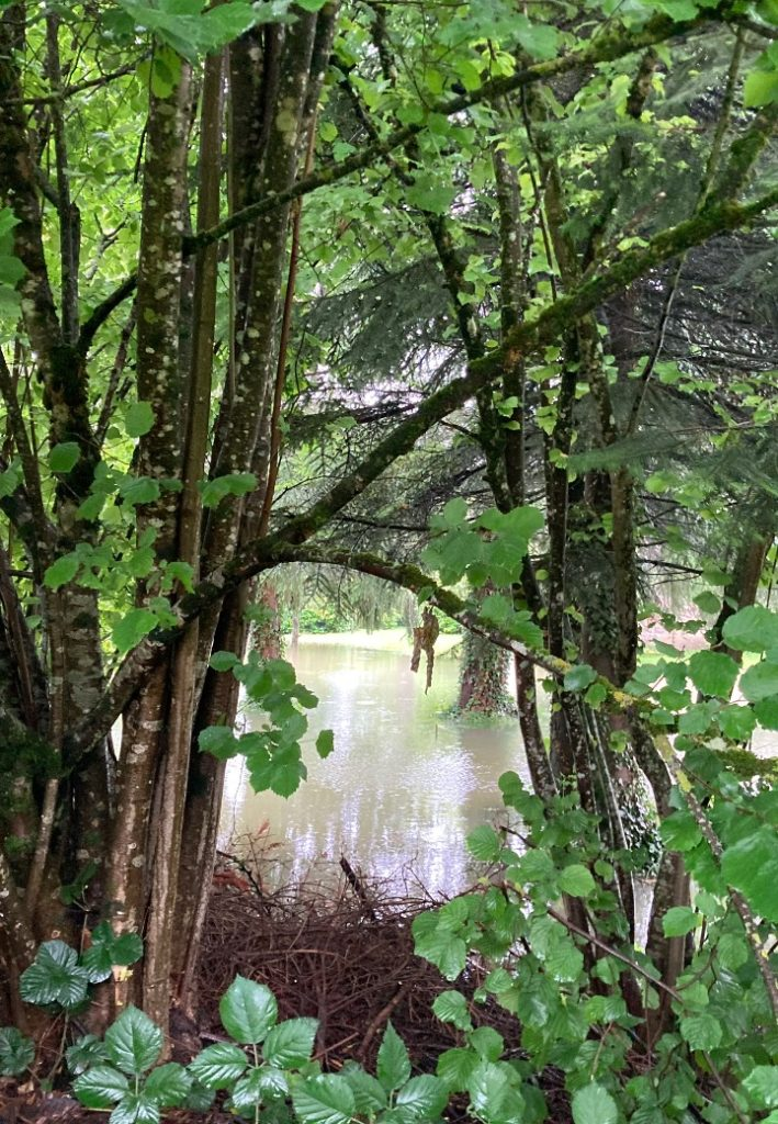 l'été sous la pluie24